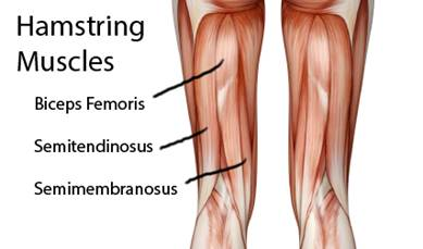 Hamstring-muscles-yoga